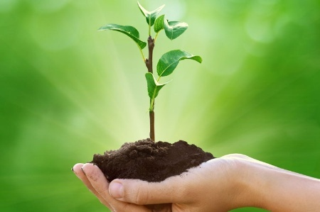 hand_holding_soil_and_plant_shoo_450