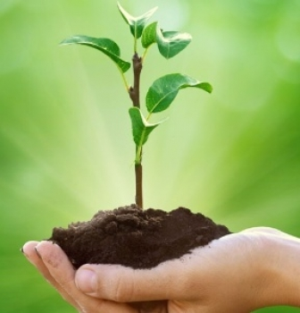 Three Keys to Advancing Sustainability within Your Company