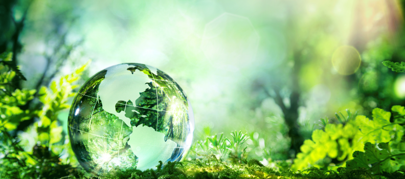 These Companies Aim to Change The World Through Sustainability