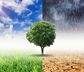 Investors See Both Risk and Investment Opportunities with Climate Change